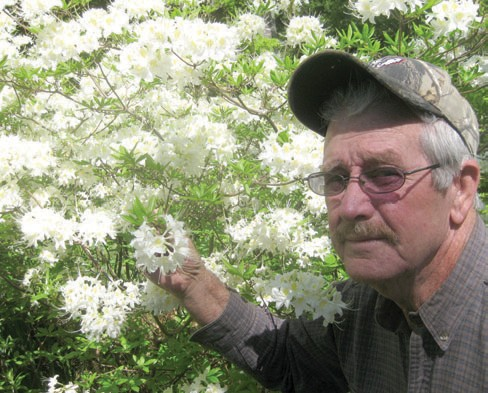 Plant collector Gay Hawkins shows the blooms of one of the largest known native Alabama Azalea displays in the area, if not the state.