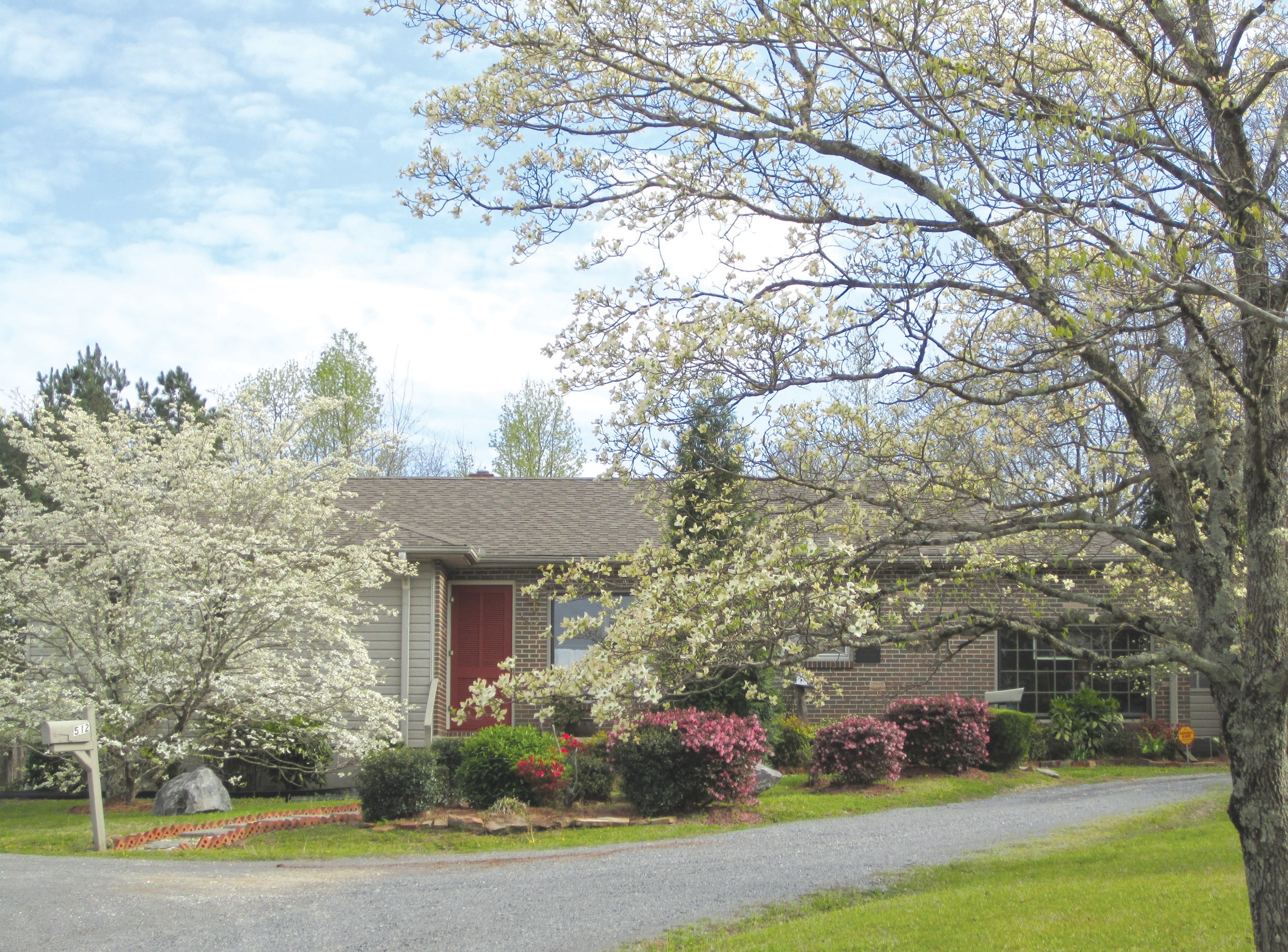 The dozen dogwoods surrounding the home of Ramona Harmon of Sellers Avenue were magnificent, but were so widely scattered over an acre or so of front lawn that the photo does them no justice. Out back, however, Mrs. Harmon exhibits a Bridal Wreath plant (inset) that's in the running for world champ. It was transplanted from her mother's homeplace in Susan Moore.