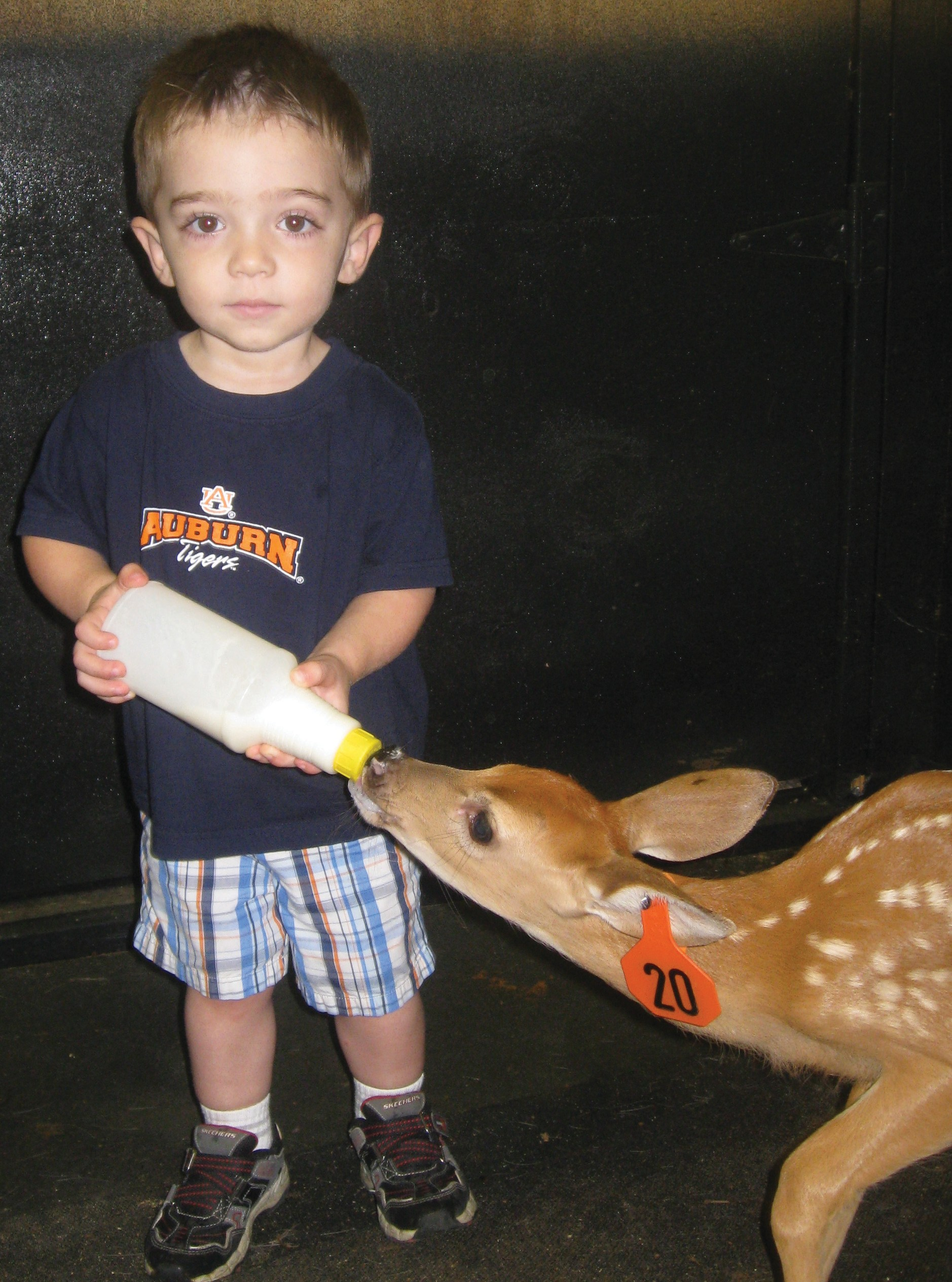 "Feeding his favorite ""baby deer,"" that he calls Aubie (or sometimes Aubie Tiger), is a job Joshua takes seriously... even to wearing his favorite Auburn T-shirt to match his baby deer's name. A busy, bright, lovable 2-year-old, Joshua talks continually about Aubie and hugs and kisses her at every opportunity. His mom and dad, Jenna and Brian Wood, point out that the little deer is not one of their herd but belongs to a friend whose barn was blown away in the April 27 storms. It'll be tough when she's weaned and Joshua learns he can't feed her anymore. Good thing he has many loving people around to console him. – Jane Hill"