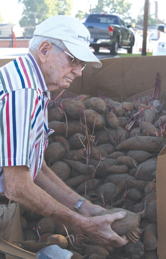 Ed Cowden of Palmerdale tosses the sweet potatoes onto the bed of a truck for other volunteers to bag them.