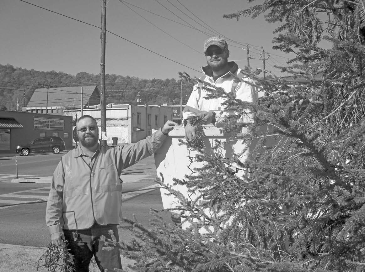 Oneonta City employees Clay Murphree (standing) and Craig Gosnell (in the cherry picker) were caught putting lights on the downtown tree at the gazebo. Public works director Roland McCoy was keeping a supervisory eye on the proceedings from a distance outside of camera range.